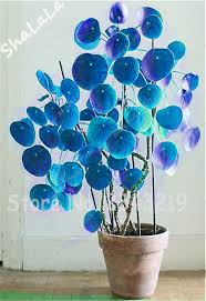 indoor water money plant promotion shop for promotional indoor