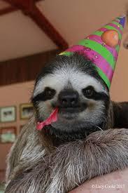 Sloth Meme Generator - birthday sloth blank template imgflip