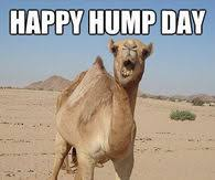Hump Day Meme Dirty - hump day camel pictures photos images and pics for facebook