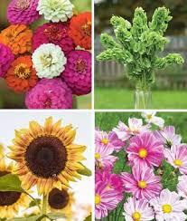 bright u0026 bold cut flower garden burpee