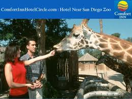 Comfort Inn San Diego Zoo Comfort Inn Hotel Circle San Diego Family Friendly Hotels And Resor U2026