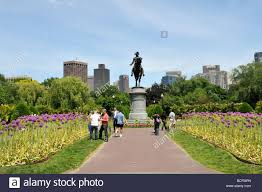 in the public gardens adjacent to boston common flowering giant