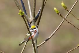 birding in north carolina birds in a changing world