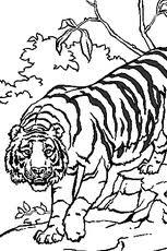 tigre en ligne gratuit à imprimer