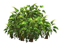Tropical Plants Images - tropical plant stock tube png by digitaltwist on deviantart