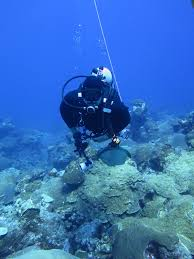 notes from the field diving at the flower garden banks coral