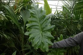List Of Tropical Plants Names - tropical plants