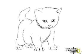 coloring page captivating drawing of a kitten drawn pencil 6