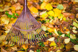 Fall Cleanup Landscaping by Yard Cleanup And Hauling San Jose Silicon Valley Yard Cleanup