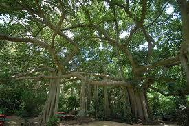 Rockhton Botanic Gardens And Zoo Rockhton Botanic Gardens All You Need To Before You Go