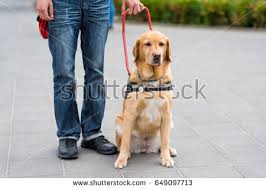 Dog Blinds Guide Dog Helping Blind Man City Stock Photo 641633023 Shutterstock