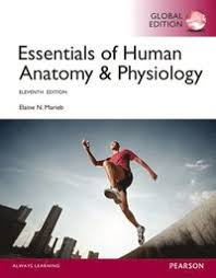Human Anatomy And Physiology Lab Manual Marieb Human Anatomy U0026 Physiology Laboratory Manual Main Version