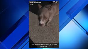 cowboys wr lucky whitehead says dog back home after being held
