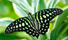 philadelphia insectarium and butterfly pavilion up to 52