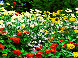 flower gardens as in every other type of gardening flower garden must have a