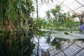 indoor reflective pond greenhouse pinterest indoor indoor