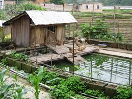 duck pond and garden backyard barn and farm pinterest duck