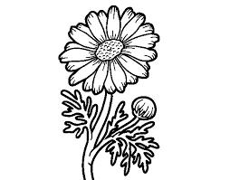 wild daisy coloring coloringcrew