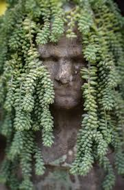 84 best head planters and pots images on pinterest head planters