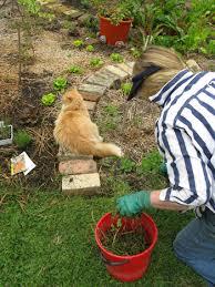 garden blogs three
