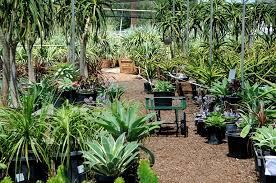 wholesale succulent nursery orange county los angeles u0026 san diego