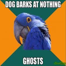 Paranoid Parrot Memes - 2 2 on test use calculator to be sure meme paranoid parrot 451