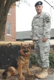 retiring military k 9 heroes desperately need adoption revisions