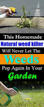 the 25 best weed killer natural ideas on pinterest weed killers