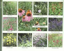 native and adapted landscape plants an austin gardening resource