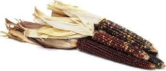 ornamental indian corn information recipes and facts