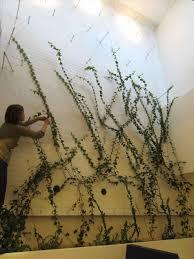 plants for dark best house must grow best indoor ivy plants house