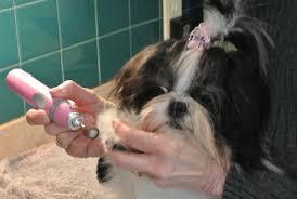 clipping dog nails