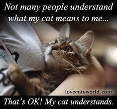 Lost Cat Meme - lost pets dubuque iowa home facebook