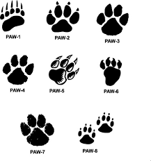 tiger paw prints walking drawing paw prints paw