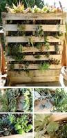 29 best diy succulent wall images on pinterest succulent wall