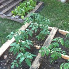 Garden Ideas With Pallets 25 Diy Ideas Using Pallets For Raised Garden Beds Snappy Pixels