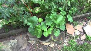 tips for growing cantaloupe in containers yes it u0027s possible