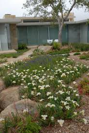 california native plant garden design 195 best uber dry and svell images on pinterest uber garden