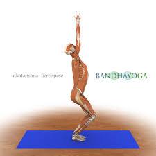 yoga anatomy download image collections learn human anatomy image