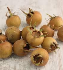 la cuisine des plantes sauvages cuisine sauvage asbl cuisine des plantes sauvages comestibles