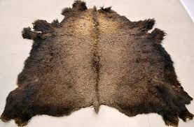 Bison Hide Rug Buffalo Hide Rug Rugs Ideas