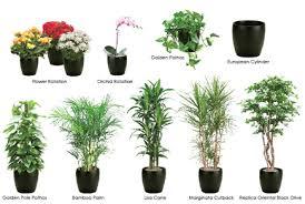 best house plants best indoor plants philippines best indoor plants that grow