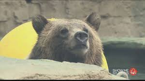 saint louis zoo stlzoo twitter