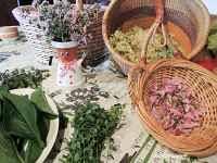 cuisine des plantes sauvages cueillette et cuisine des plantes sauvages saxel 74