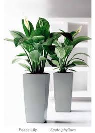 best 25 office plants ideas on pinterest office ideas for work