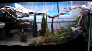 leopard gecko terrarium w big water feature youtube