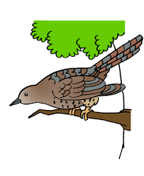 creative realistic bird coloring pages inexpensive article