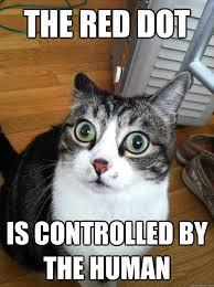 Dat Ass Cat Meme - dat ass cat meme