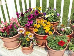 Flower Pots - authentic pharmaceuticals ltd garden flower pot and cover with