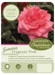 Fragrant Patio Plants - sunrosa fragrant pink gardeners confidence collection